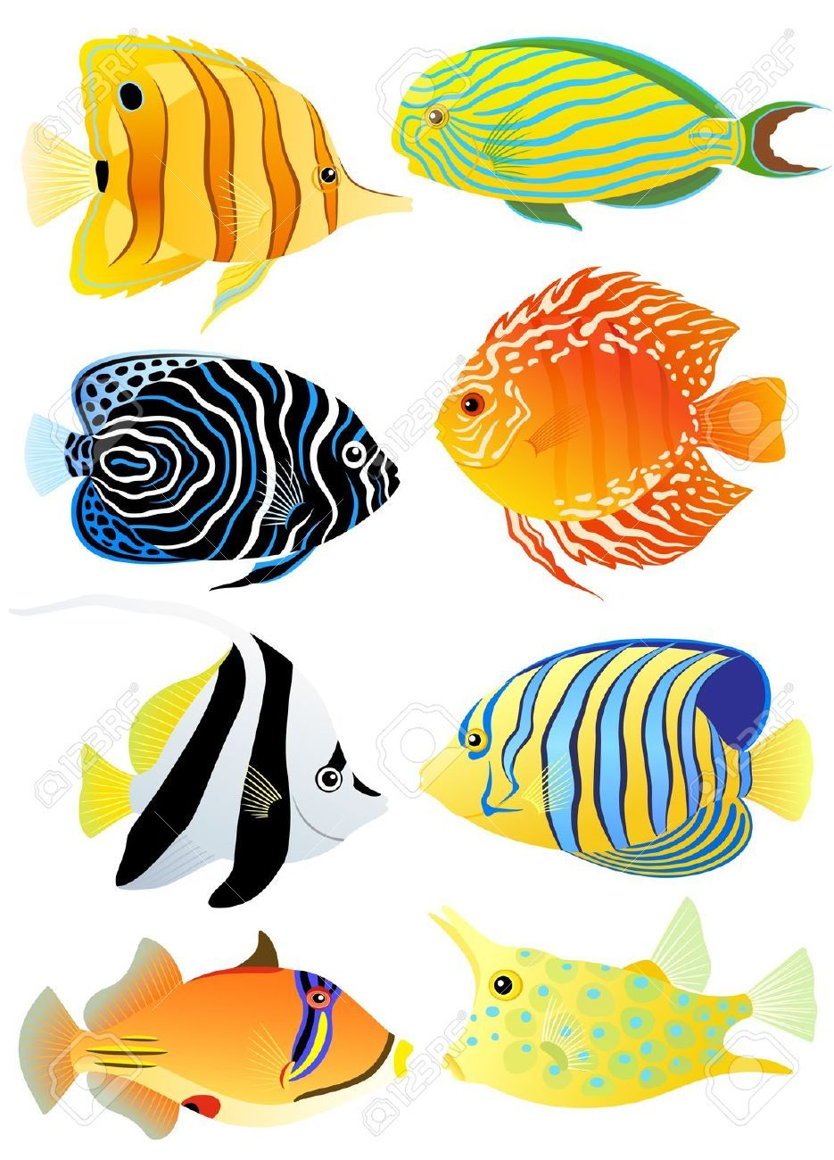 935x1300 Fish Pictures