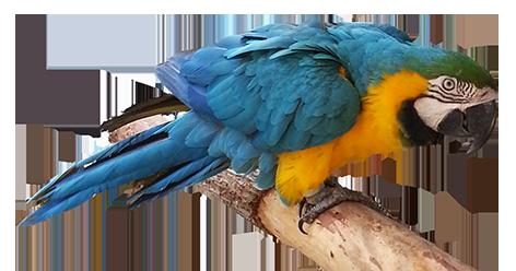 472x248 Bird Clip Art