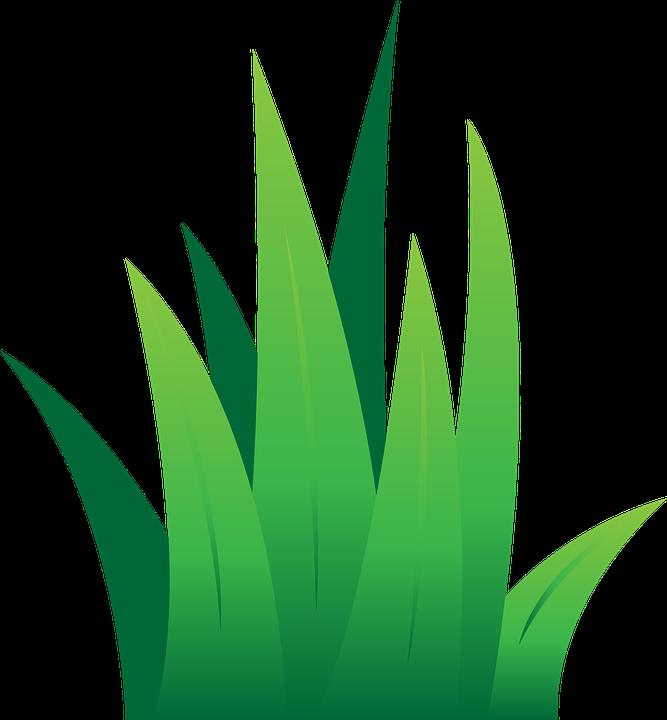 667x720 Green Grass Clip Art Lawn Green Grass Free Vector Graphic