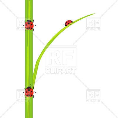 400x400 Ladybird On Stem Of Green Grass Royalty Free Vector Clip Art Image