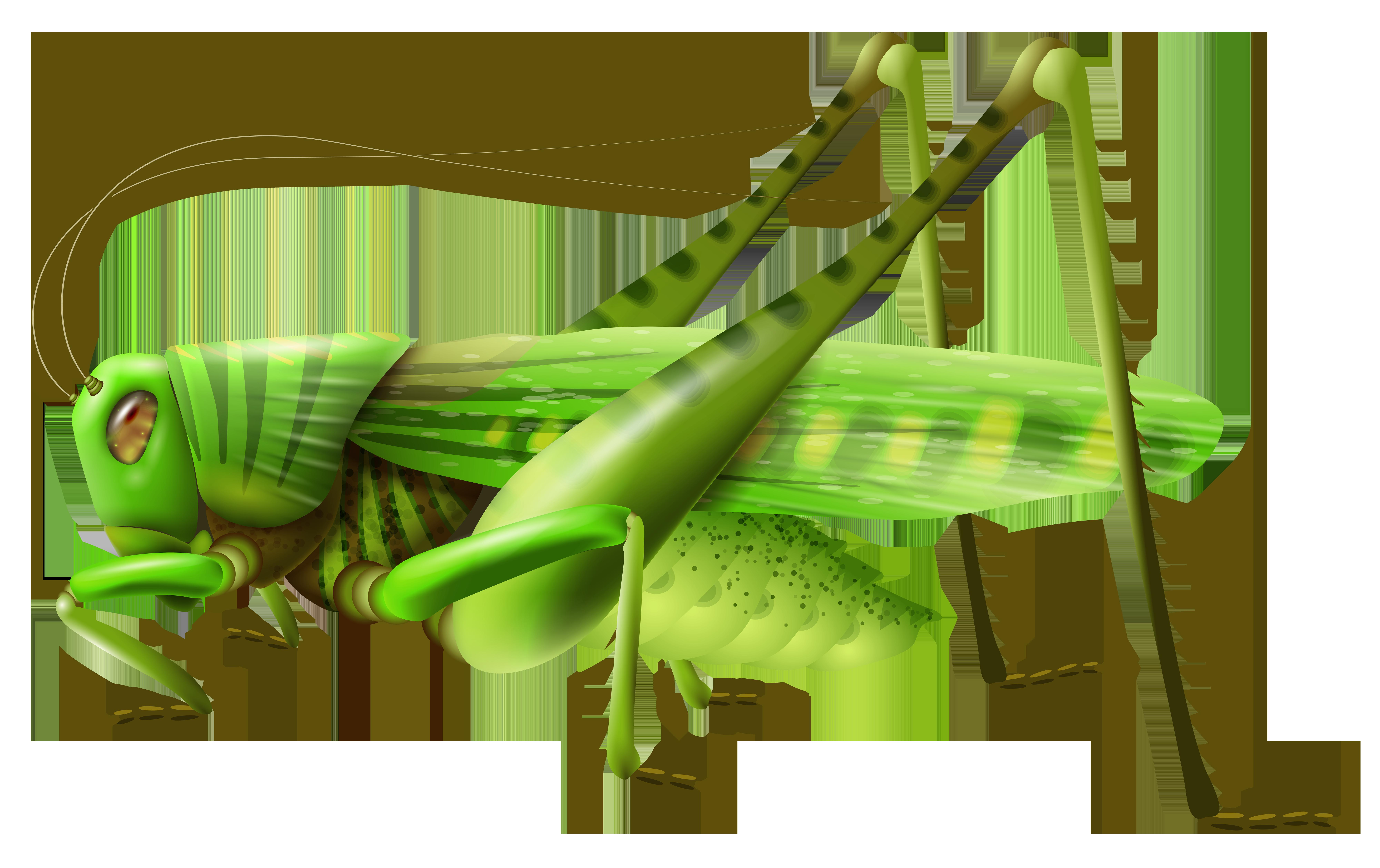 8000x5031 Top 77 Grasshopper Clip Art