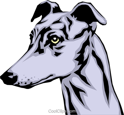 480x444 Greyhound Royalty Free Vector Clip Art Illustration Anim0340