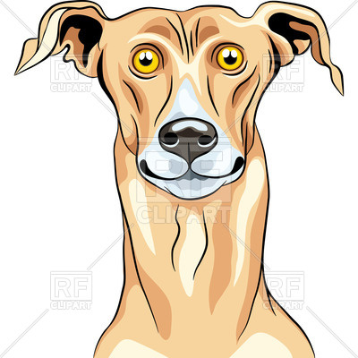 400x400 Portrait Of Surprised Greyhound Royalty Free Vector Clip Art Image