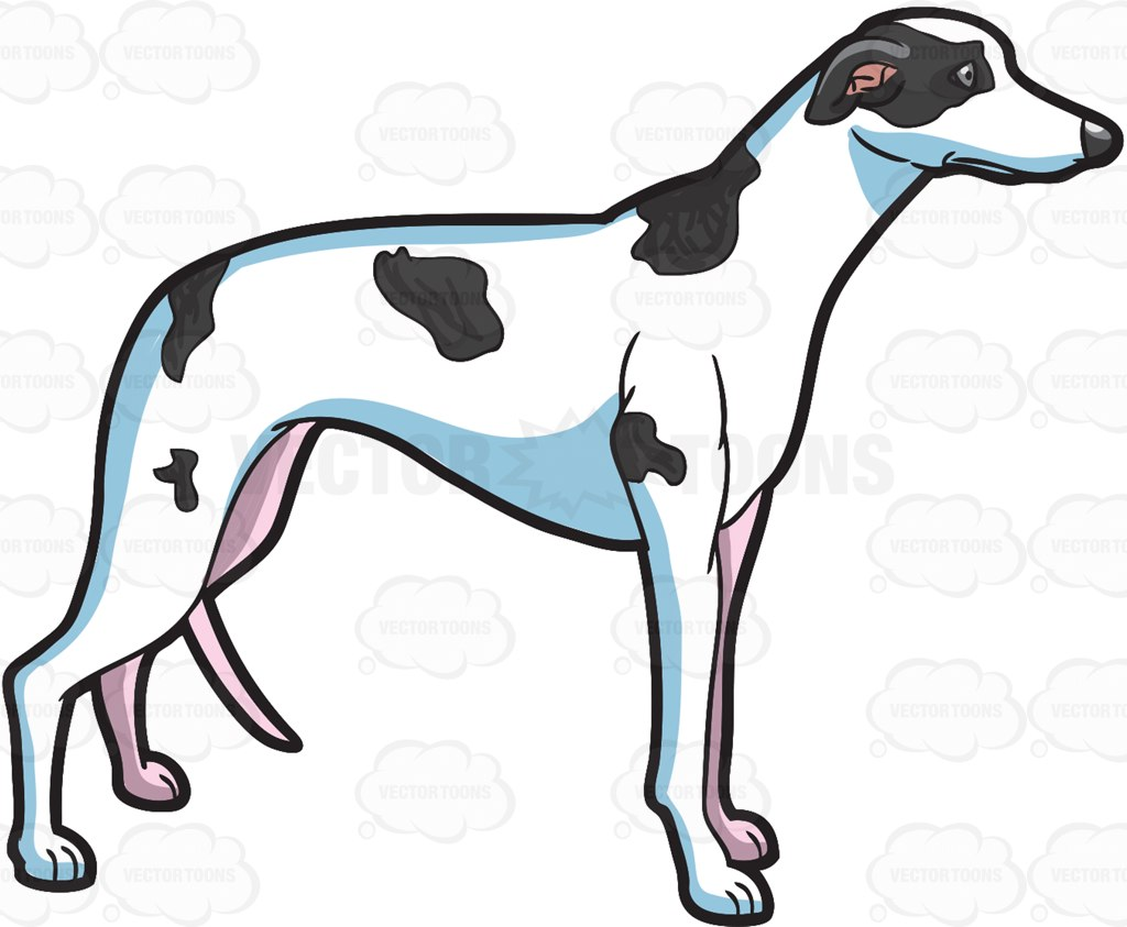 1024x843 An Alerted Greyhound Cartoon Clipart Vector Toons