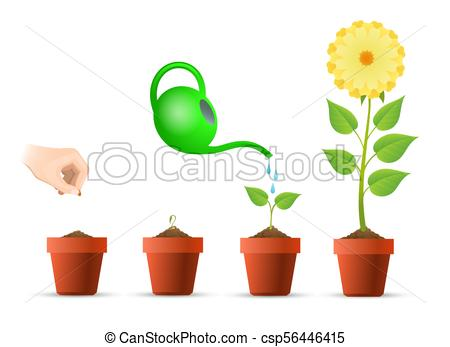 450x347 Plant Growing Stages In Pot. Planting Stages. Plant Growing