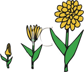 350x297 Stages Of A Flower Growing