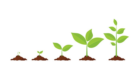 463x240 Collection Of Plant Growing Clipart High Quality, Free