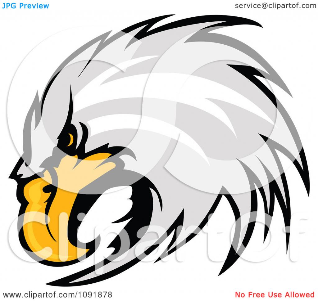 1024x970 How To Draw A Bald Eagle Head Clipart Focused Bald Eagle Head