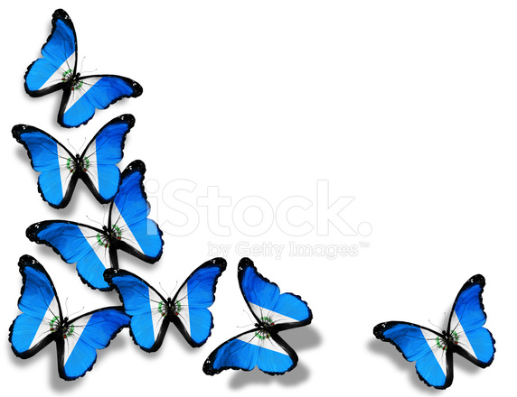 572x440 Guatemala Flag Butterflies, Isolated On White Background Stock