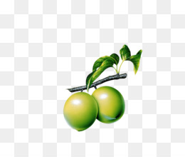 260x220 Guava Black And White Scalable Vector Graphics Clip Art