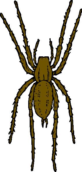 282x589 House Spider Clip Art