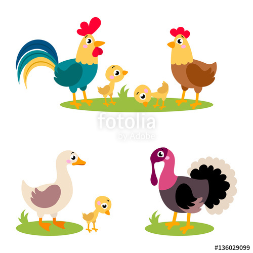 500x500 Set Of Popular Colorful Vector Farm Birds. Cute Farm Birds