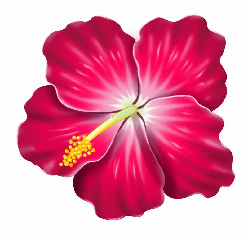 800x768 Pink Hibiscus Clip Art Clipart Illustration Of A Yellow Hawaiian
