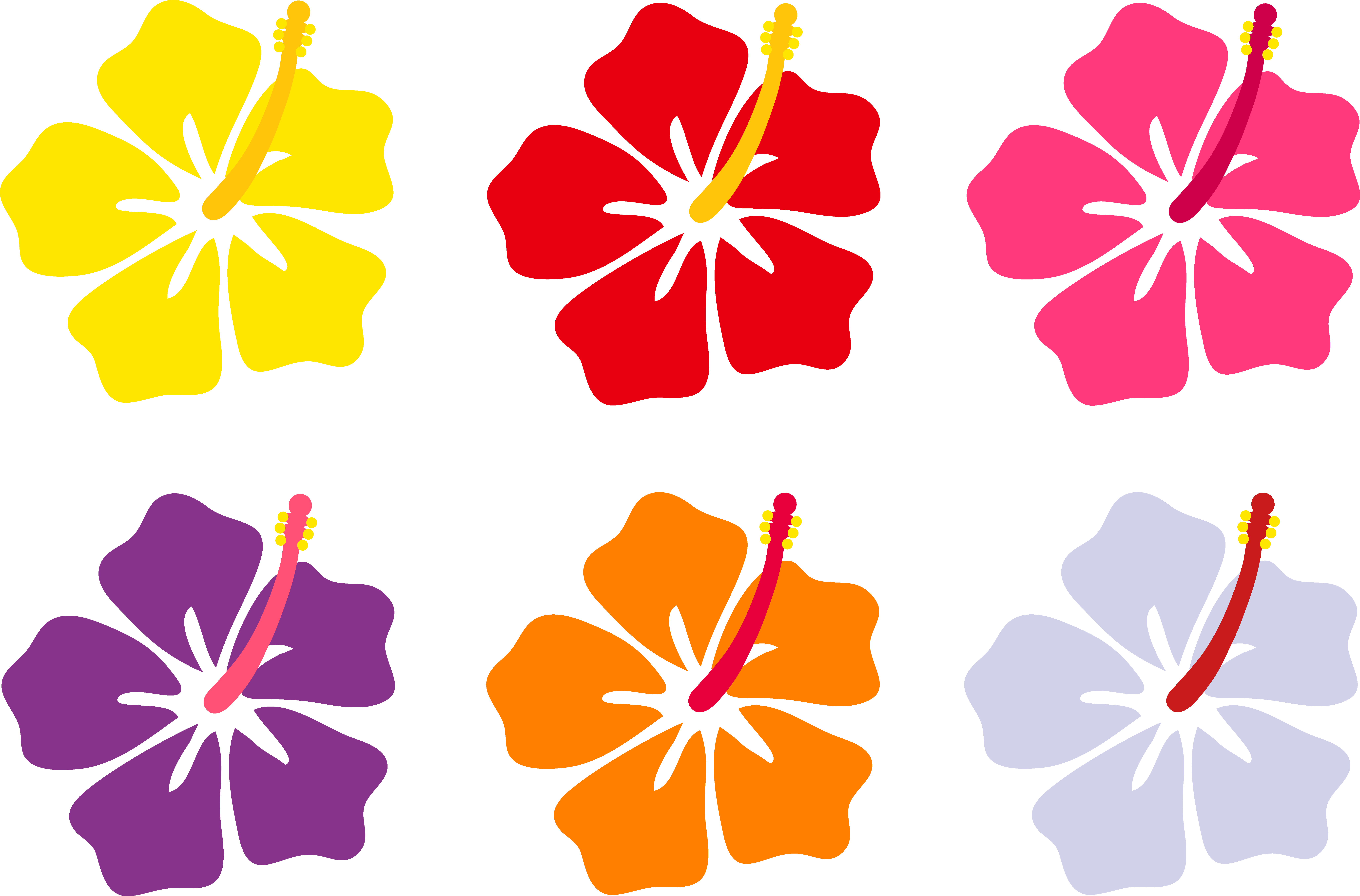 8230x5425 Hawaiian Hibiscus Are The Seven Known Species Of Hibiscus Regarded