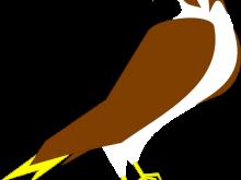 220x165 Falcon Clipart Peregrine Falcon Falco Peregrinus Duck Hawk Clip