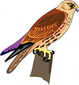 278x300 Hawk Clipart Flying Hawk Art Clip Art Pkglac Clipart