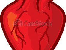220x165 Human Heart Clipart Human Heart Clipart Image Anatomy