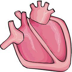 240x240 Human Heart Clipart