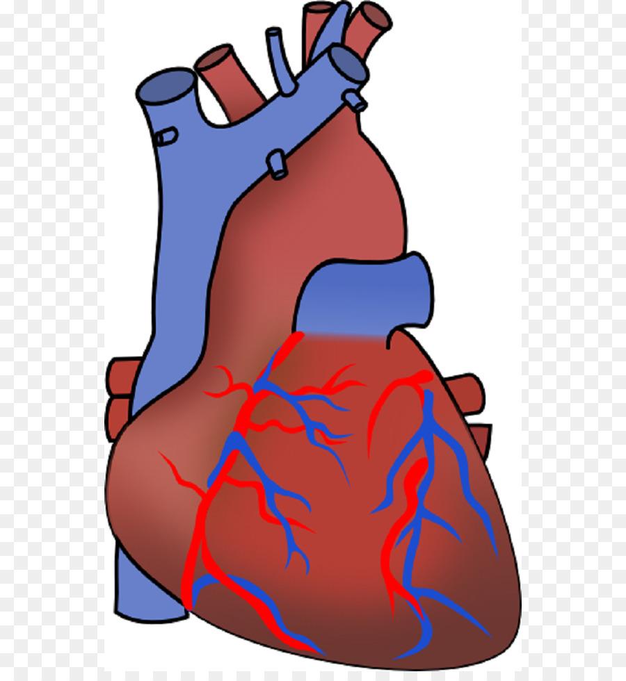 900x980 Myocardial Infarction Heart Failure Cardiovascular Disease Clip
