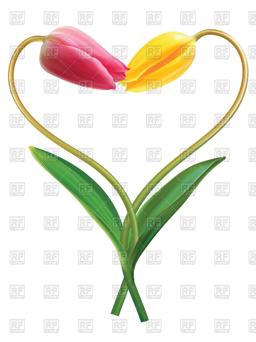 900x1200 Heart made of two yellow tulips Royalty Free Vector Clip Art Image