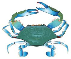 hermit crab clipart at getdrawings com free for personal use rh getdrawings com blue claw crab clipart