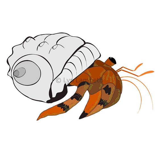 570x570 Hermit Crab Clipart, Commercial Use, Under The Sea, Starfish Clip