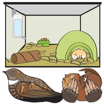350x350 Animal Torpor And Hibernation Clip Art By Studio Devanna Tpt