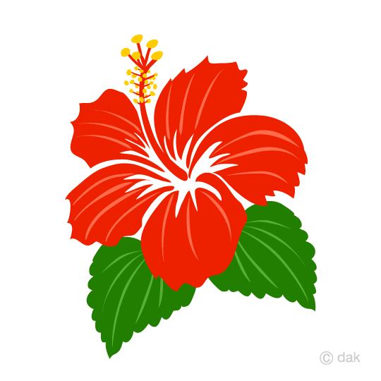 540x540 Free Hibiscus Clip Art On The South Island Cartoon