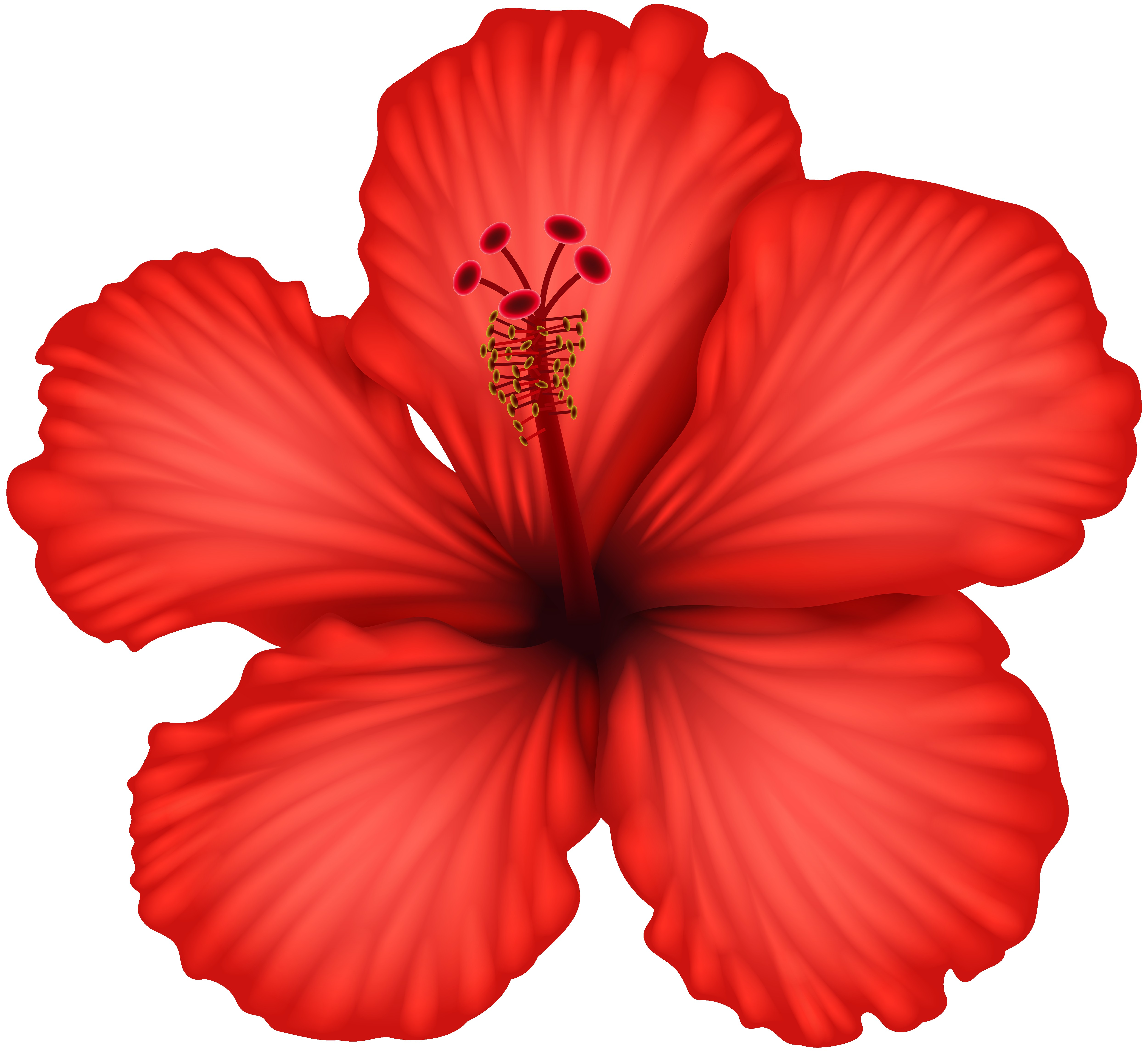 5000x4577 Hawaiian Hibiscus Drawing Clip Art Flower Png Download Remarkable