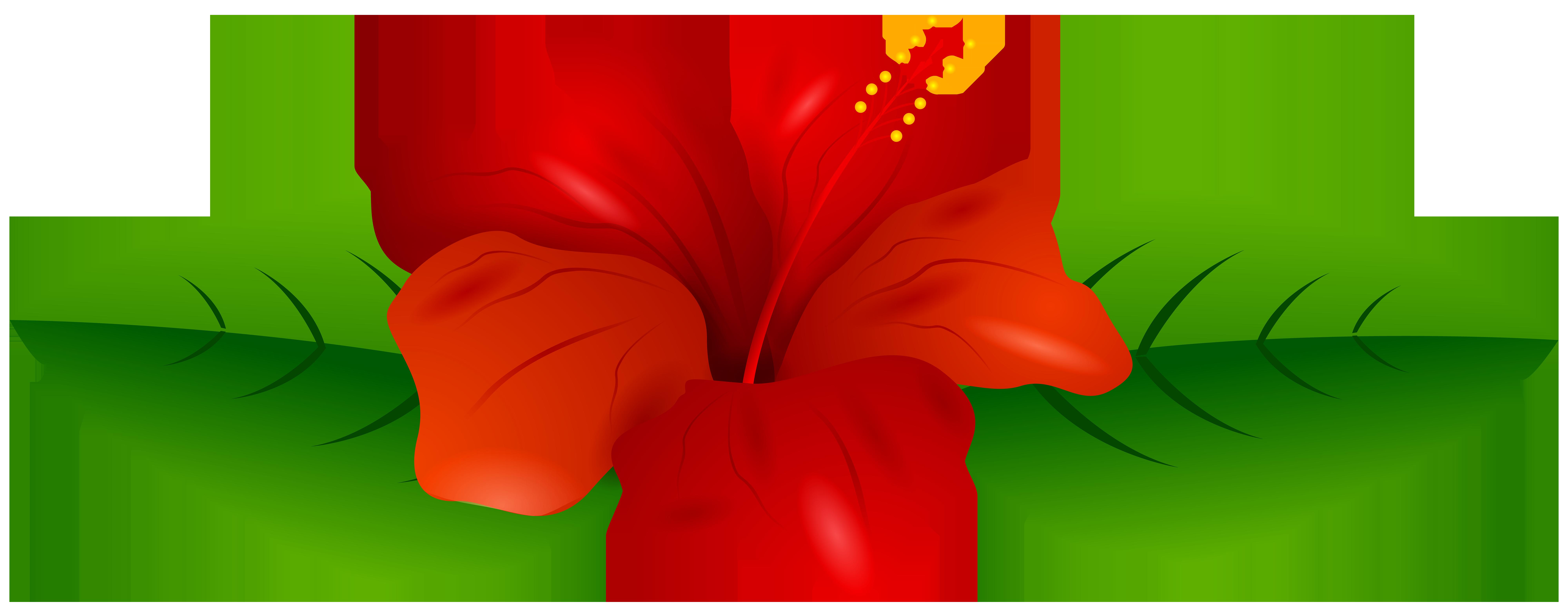 8000x3111 Red Hibiscus Transparent Png Clip Art Imageu200b Gallery