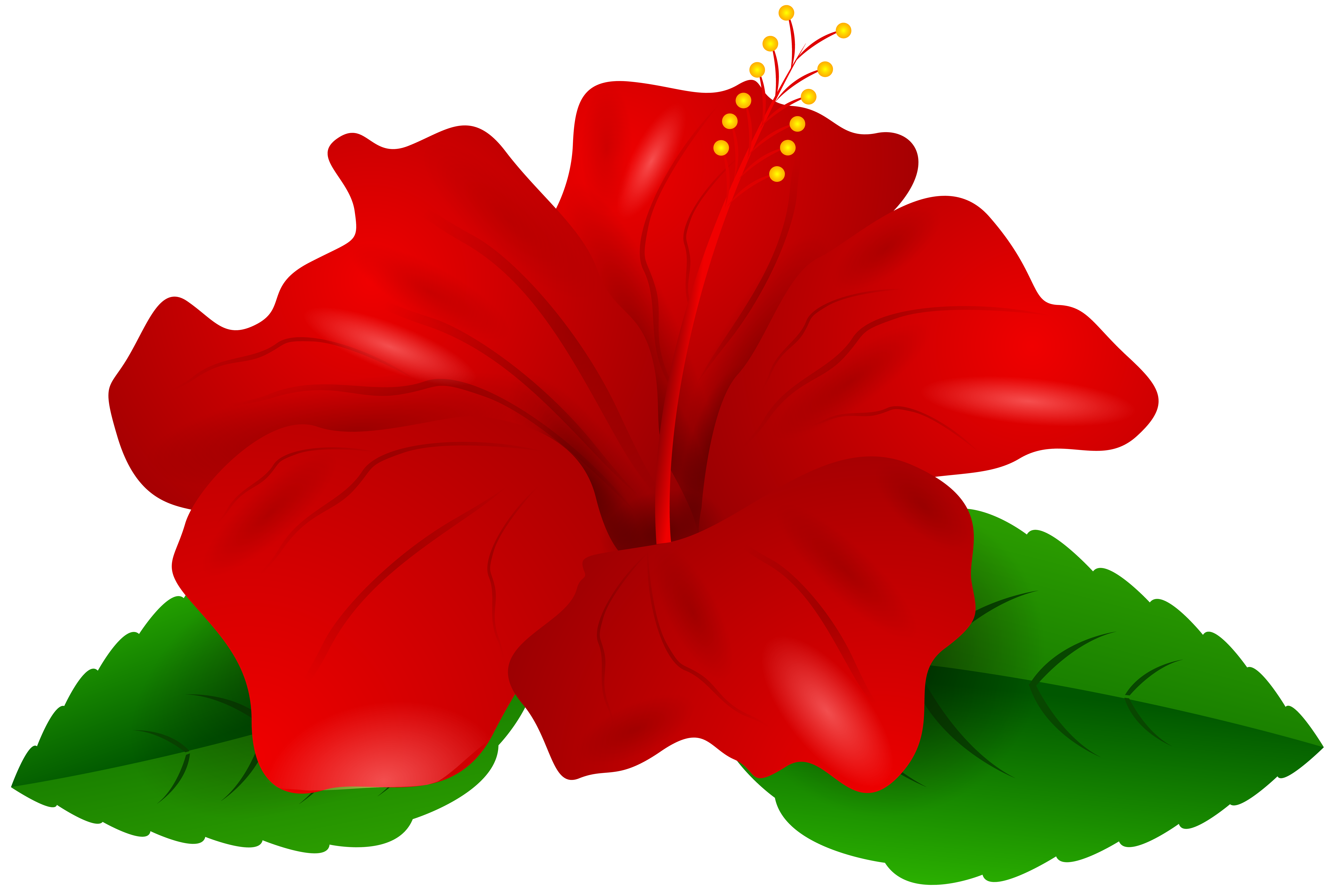 8000x5376 Red Hibiscus Transparent Png Clip Artu200b Gallery Yopriceville