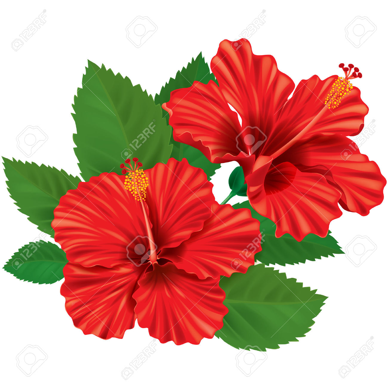 Hibiscus Clipart At Getdrawings Free For Personal Use Hibiscus