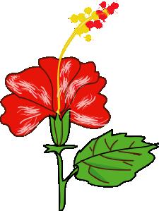 225x299 Flower Hibiscus Clip Art Free Vector 4vector