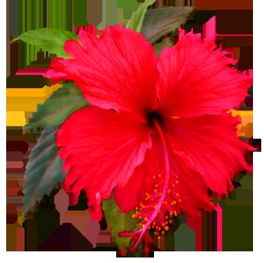 384x383 Flower Image Gallery