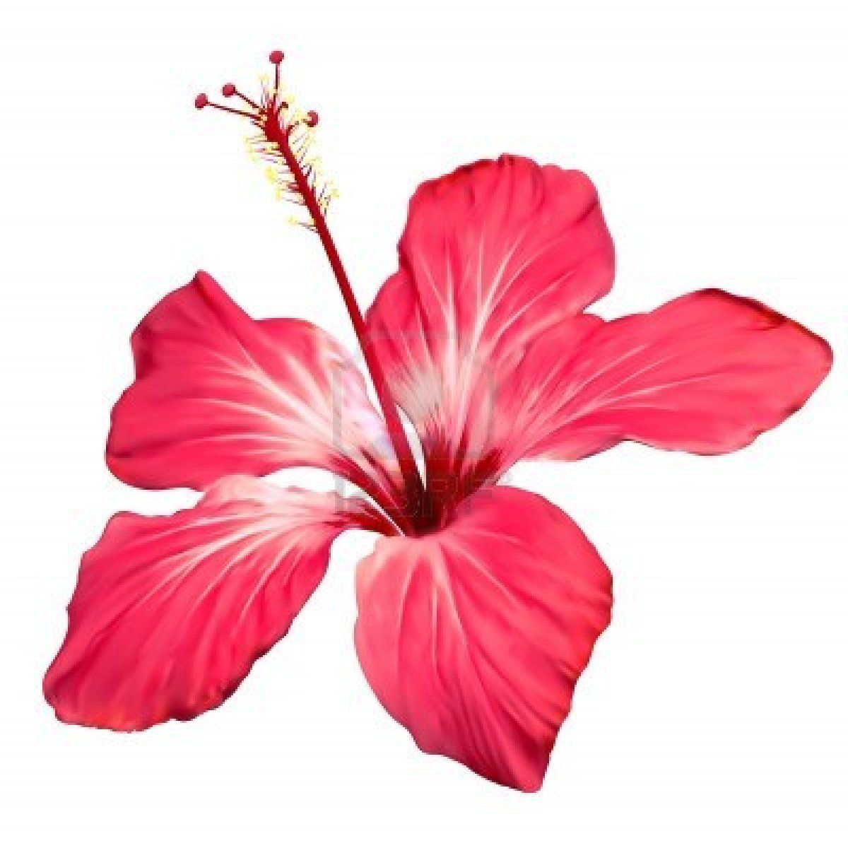 1200x1200 Hibiscus Flower Border Clip Art