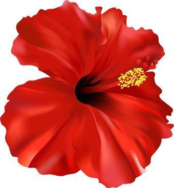 340x367 Hibiscus Flower Clipart