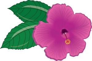 300x199 Hibiscus Flower Clipart Image