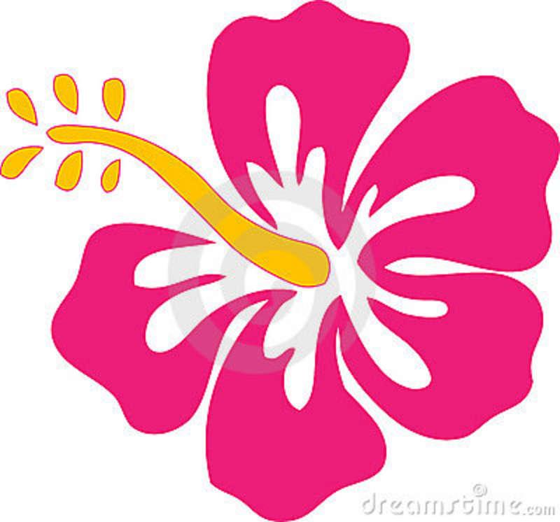 800x746 Hibiscus.hibiscus Flowers The Daily Hibiscus