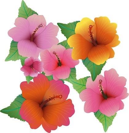 420x432 Flower Hibiscus Clip Art Free Vector 4vector