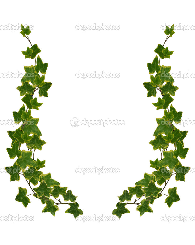 819x1024 Ivy Leaves Clipart