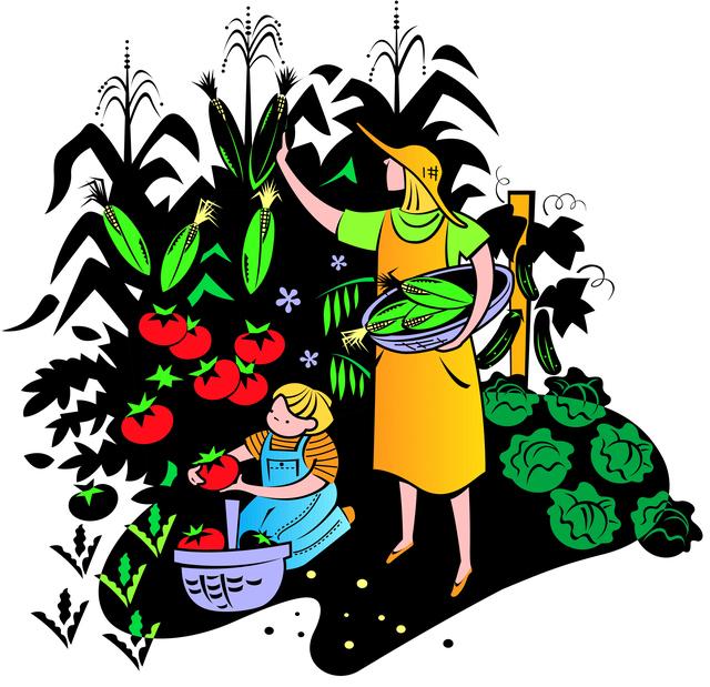 640x619 Vegetable Garden Clipart Clipart Panda