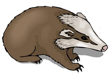 360x270 Badger Clipart Mean