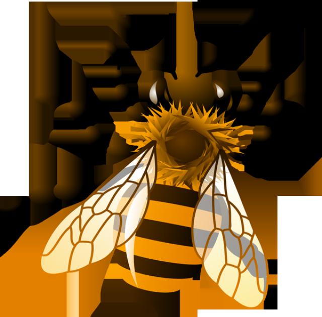 640x631 Honey Bee Clipart