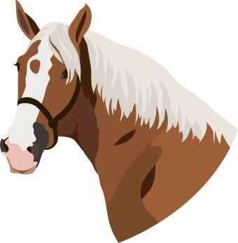 340x347 Luxury Horse Face Clipart