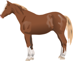 300x252 Baby Horse Clipart Download Horse Clip Art Free Clipart Of Horses