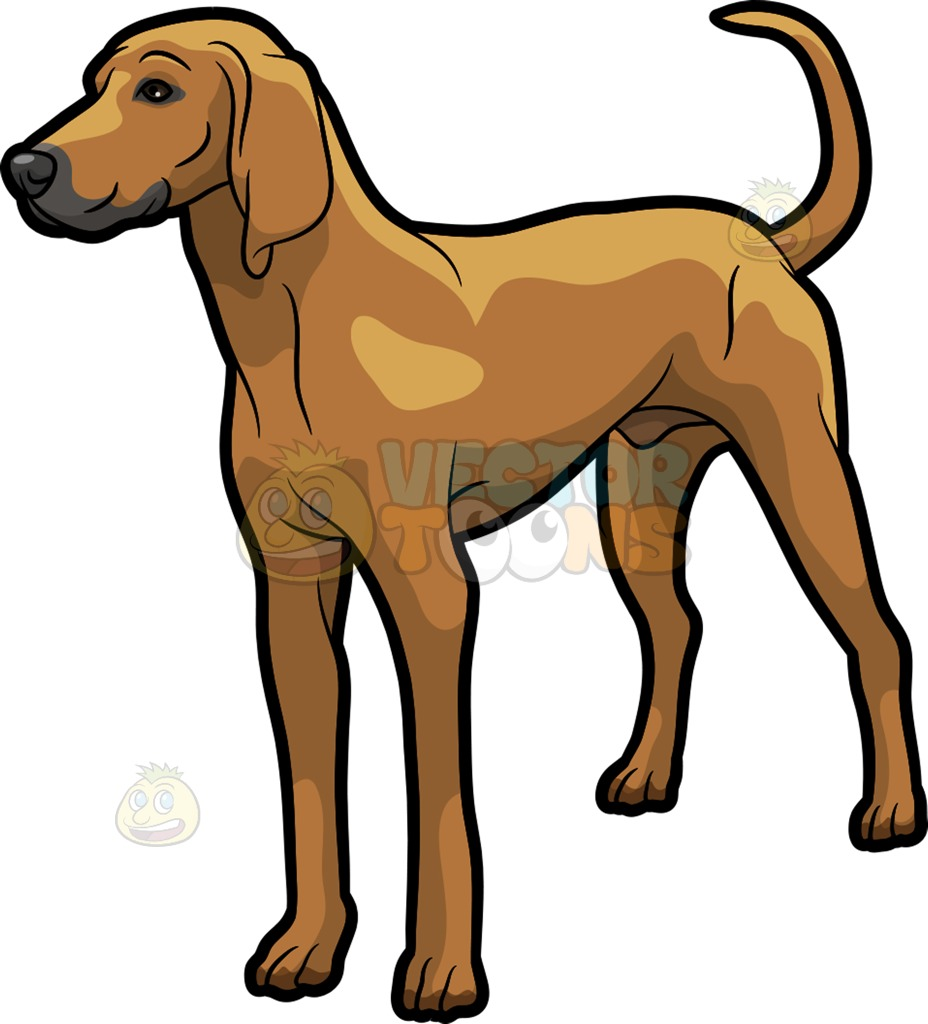 928x1024 A Tough Looking Coonhound Pet Dog Cartoon Clipart Vector Toons