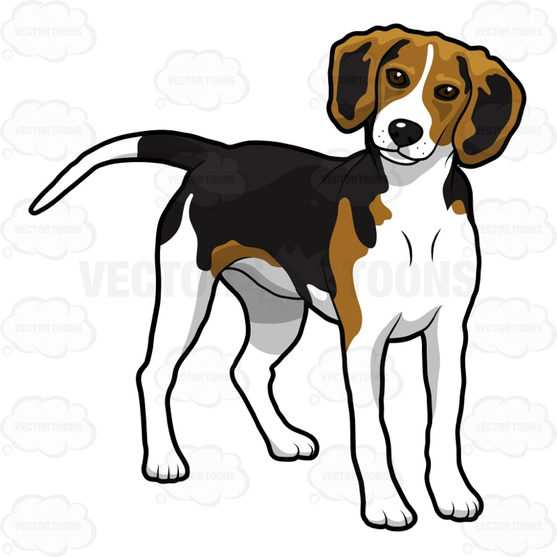800x800 Beagle Standing On All Fours Beagle And Vector Clipart