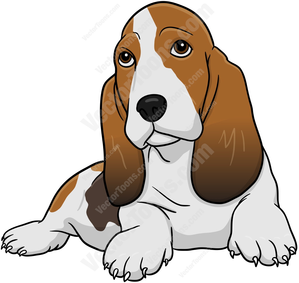 1023x970 Brown And White Basset Hound Lying Down Cartoon Clipart Vector Toons