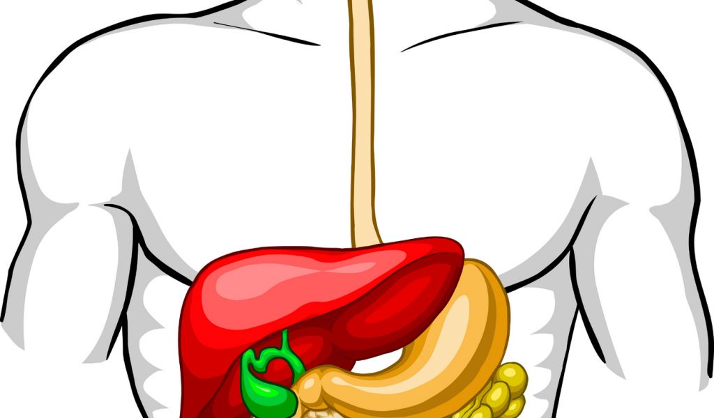 1024x600 Simple Digestive System Diagram In Color Digestive System Clip Art