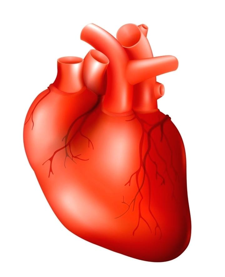 720x884 Anatomical Heart Clip Art Human Heart Free Stock Photo Clip Art
